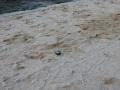 Bouleplatzeinweihung Weißwasser 2014